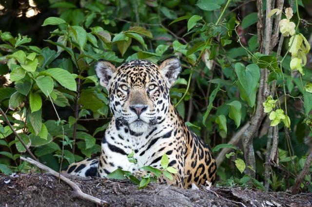 1409_Pantanal-1518