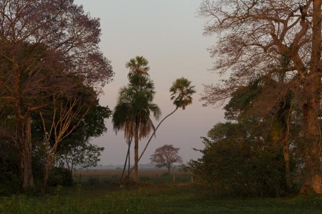 1409_Pantanal-3747