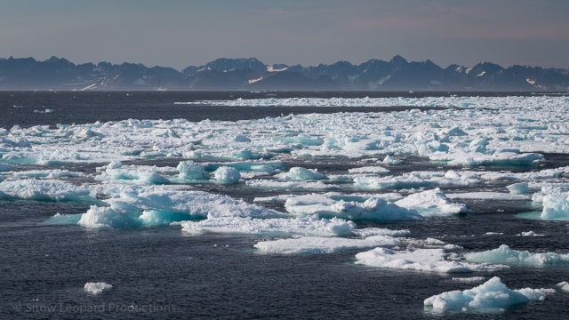 Broken ice pack near Scoresby Sund