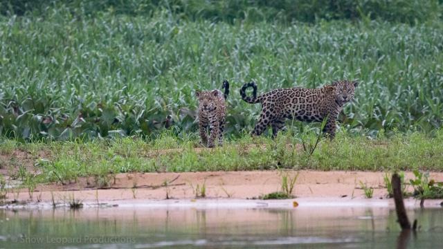 1509_Pantanal-1903