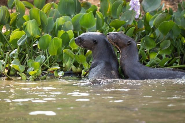 1509_Pantanal-8910