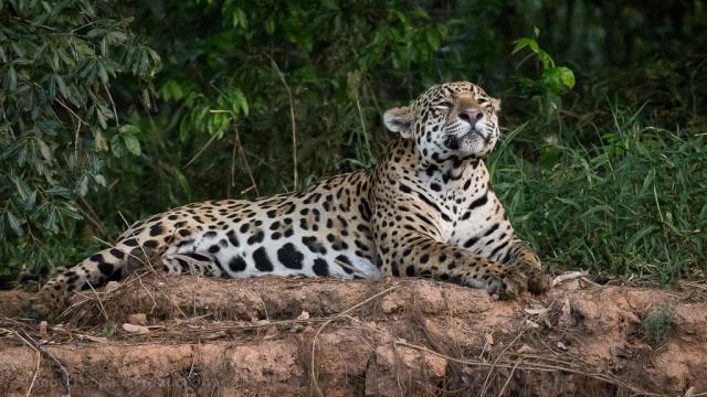 1509_Pantanal-9623