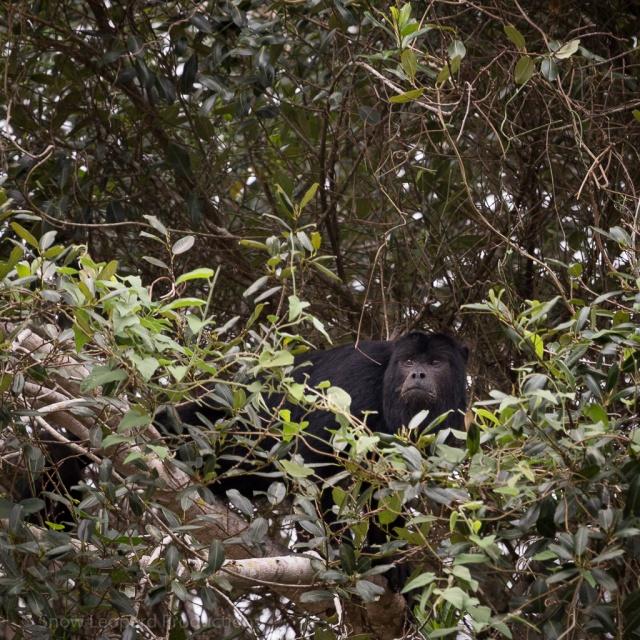 1509_Pantanal-9928