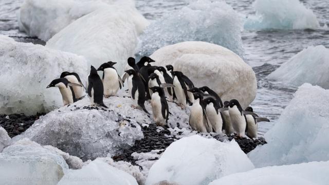 1511_Antarctica-5282