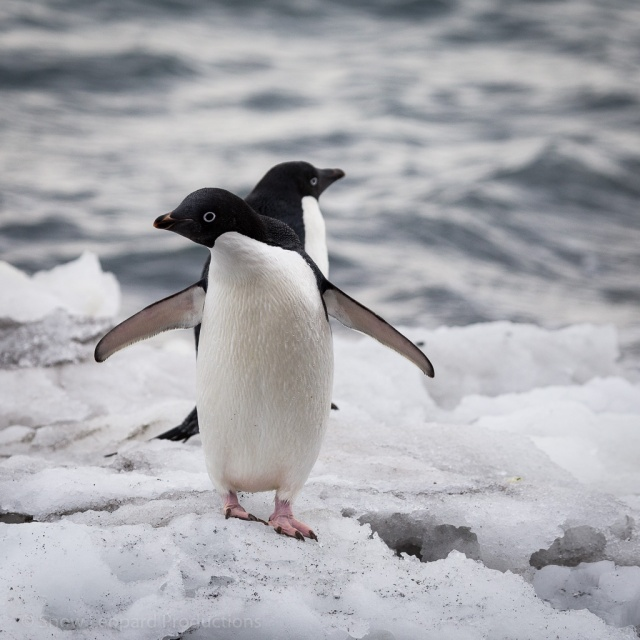 1511_Antarctica-5311