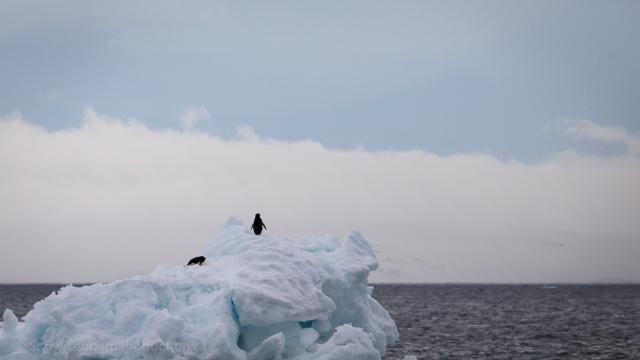 1511_Antarctica-5315