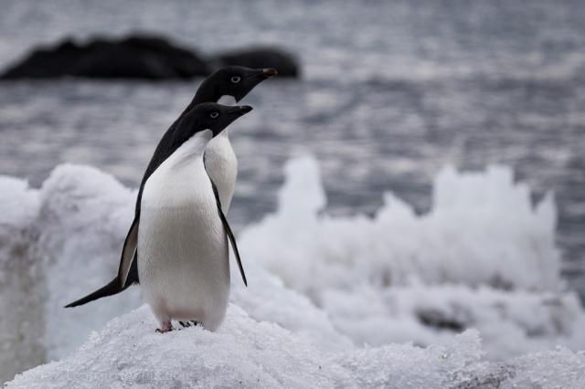 1511_Antarctica-5339