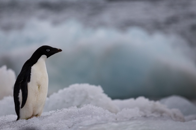 1511_Antarctica-5385
