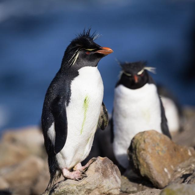 1511_Falklands-2716