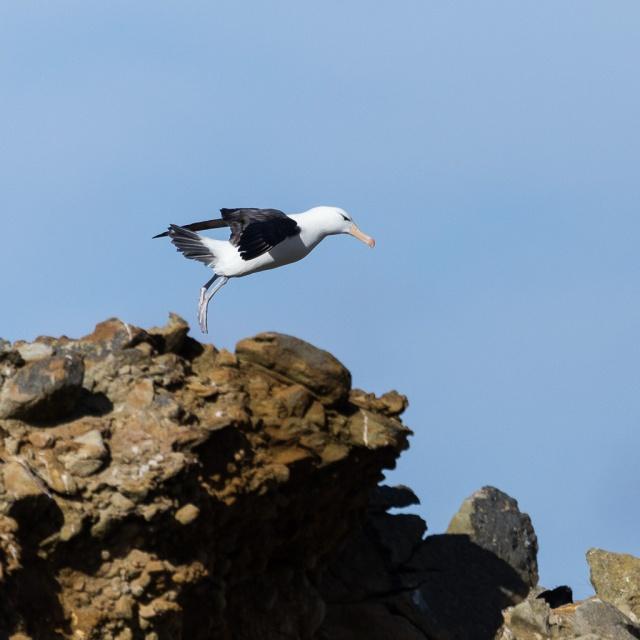 1511_Falklands-2737