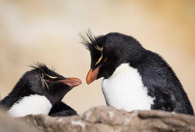 1511_Falklands-2793