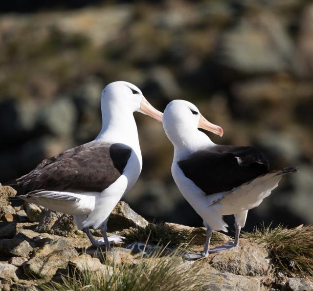 1511_Falklands-2939