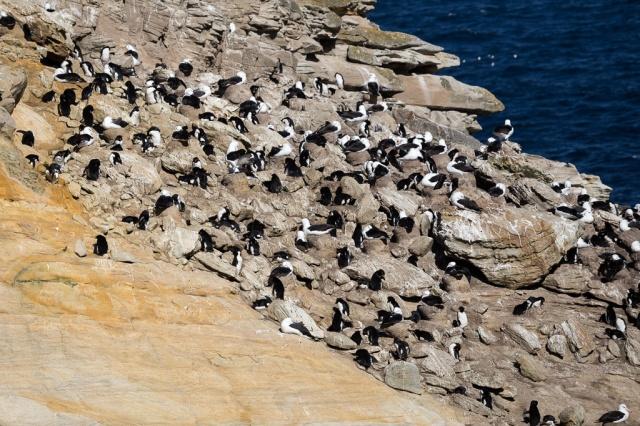 1511_Falklands-3133