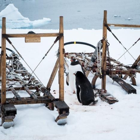 1511_Antarctica-5429-2