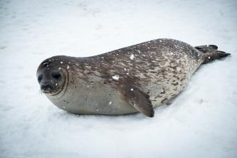 1511_Antarctica-5465-2