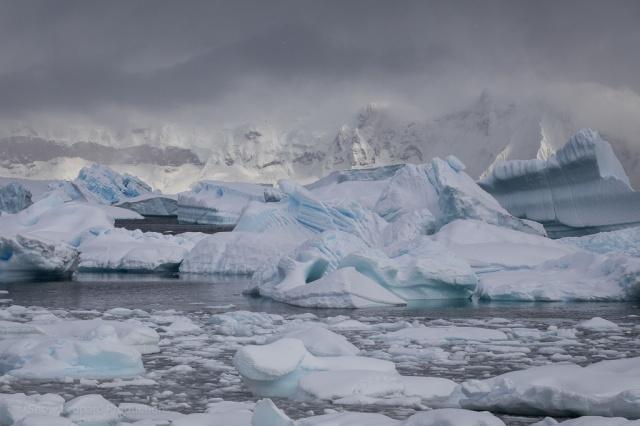 1511_Antarctica-5504