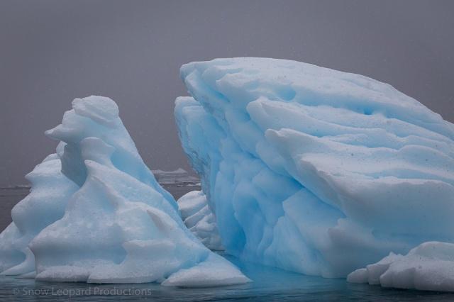 1511_Antarctica-5811