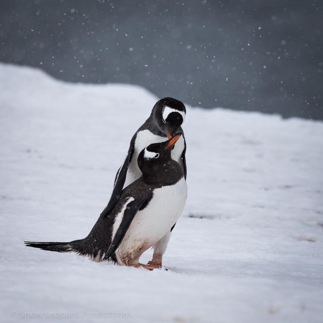 1511_Antarctica-5892