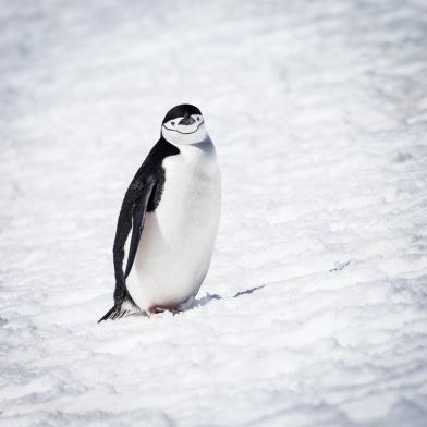 1511_Antarctica-5895