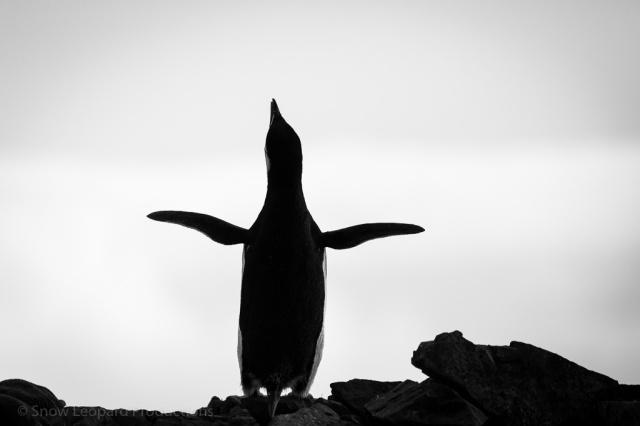 1511_Antarctica-6125